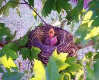 Babybirds2_2